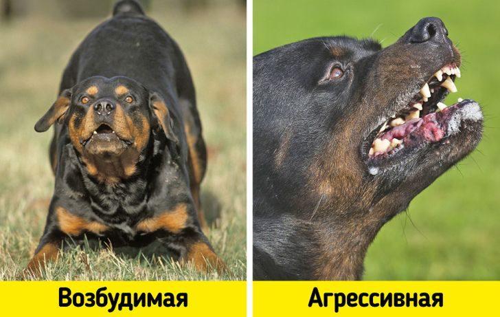11 распространенных мифов о собаках