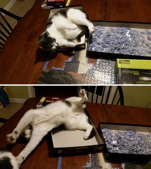 15 примеров, почему собирать пазлы нужно в комнате, в которой нет кошки