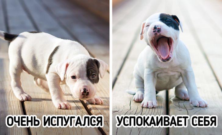 Страхи домашних животных, с которыми под силу справиться по-настоящему любящему хозяину