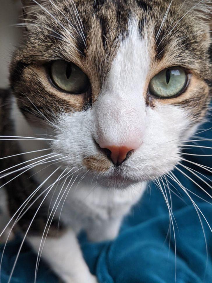 19 человек, которые однажды завели прожорливого кота