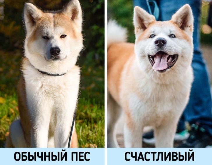 8 признаков того, что ваша собака — одно из счастливейших животных в мире