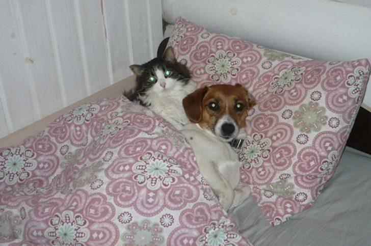 Кошки и собаки, которые зарыли топор войны и живут душа в душу