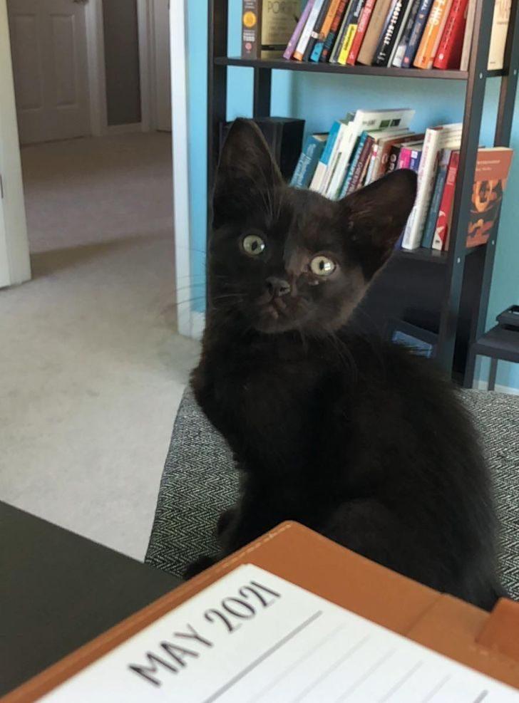 Котики, которые чуть-чуть помогли судьбе найти для них правильного человека