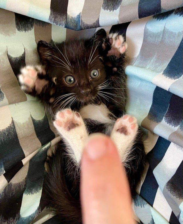 Очаровательные котики, которые задались целью развеселить вас и без сомнения сделают это
