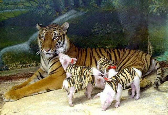 Коллекция фотографий с животными, которые подарят улыбку и поднимут настроение