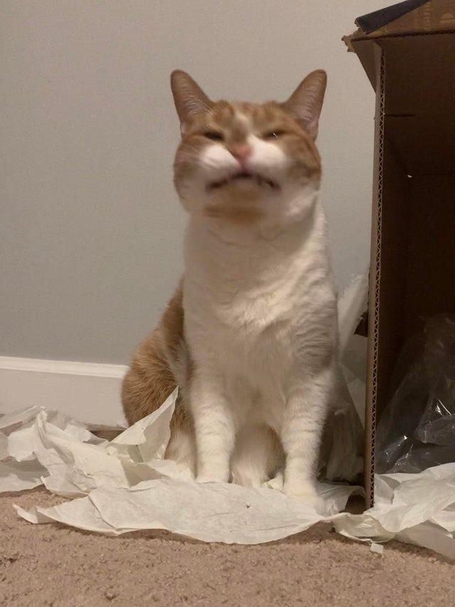 Неудачные фото котиков, которые те хотели бы удалить, но они были нагло слиты в Интернет
