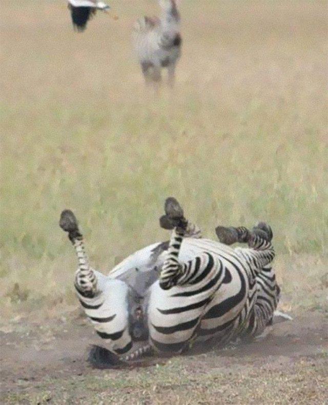 Неудавшиеся, но смешные и забавные фотографии дикой природы