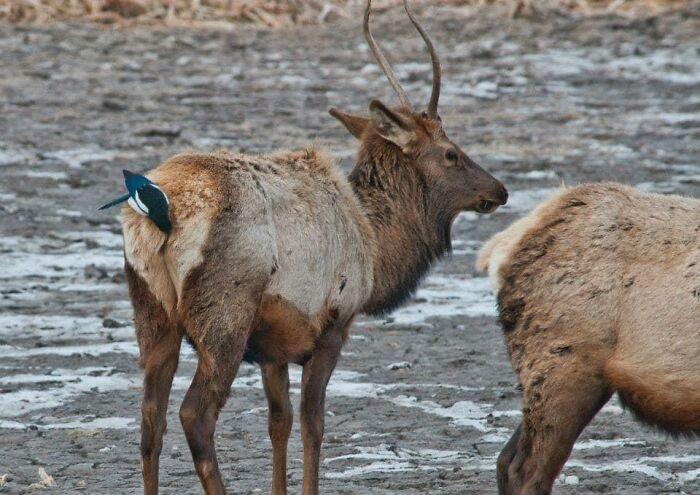 Неудачные фото природы от людей, которые хотели красиво сфотографировать животных, а получили это
