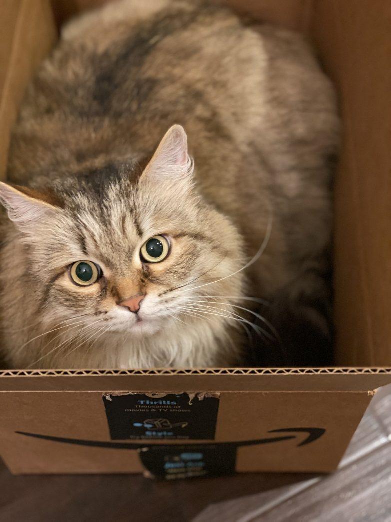 Почему кошки обожают картонные коробки?