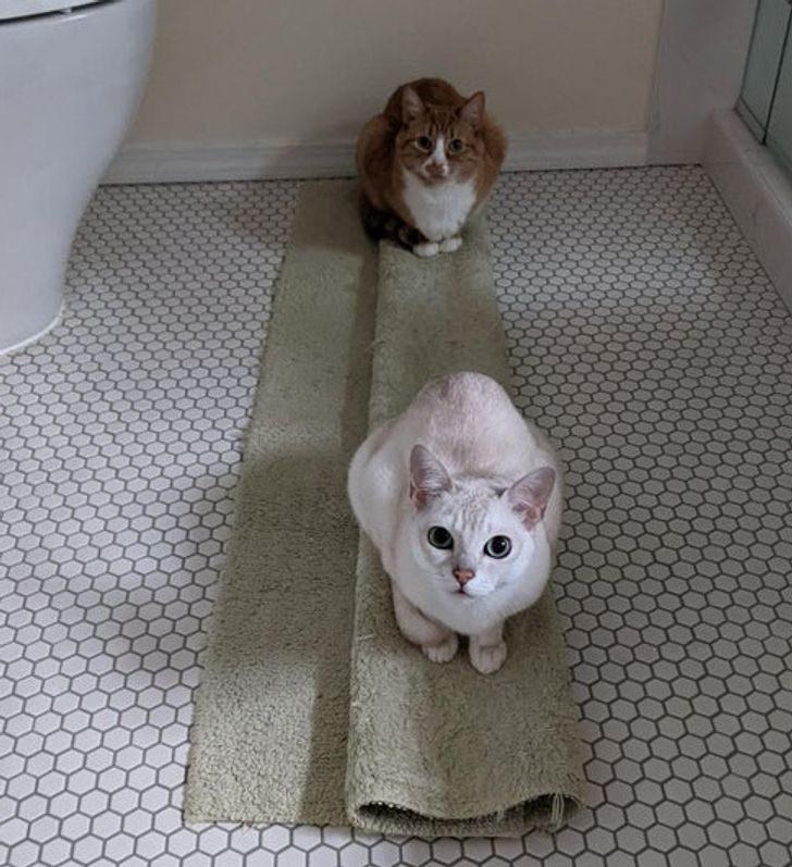 Практические трюки, как поймать котика в нехитрую ловушку, ничего не делая