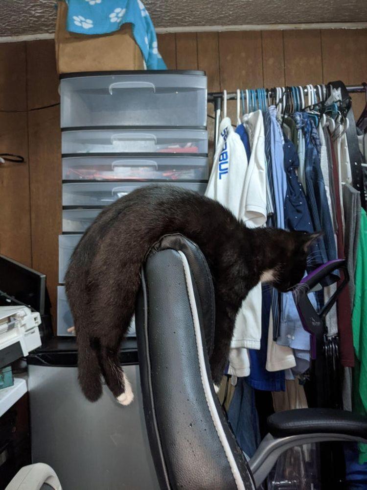 Кошки с ошибкой в программе, которые позабавили странным поведением свладельцев