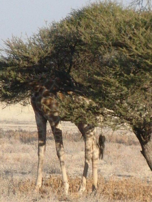 Забавные фотографии с дикими животными