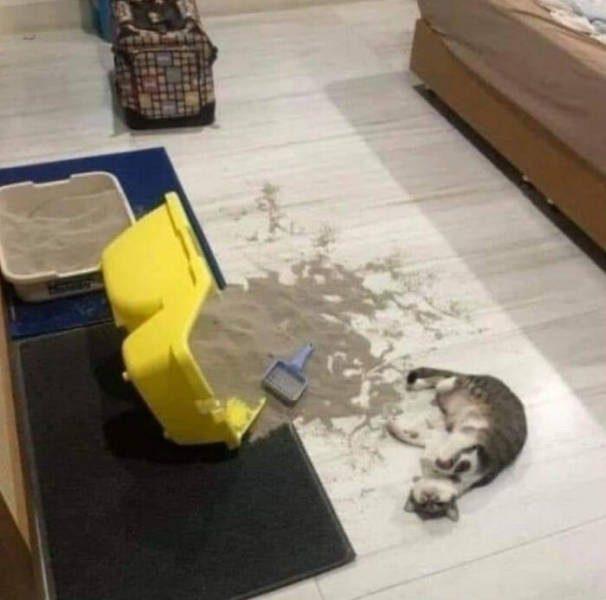 Забавные котики для хорошего настроения