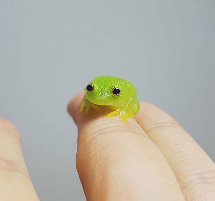 Крошечные животные, которые умещаются на одном пальце, доказывая, что маленький = милый
