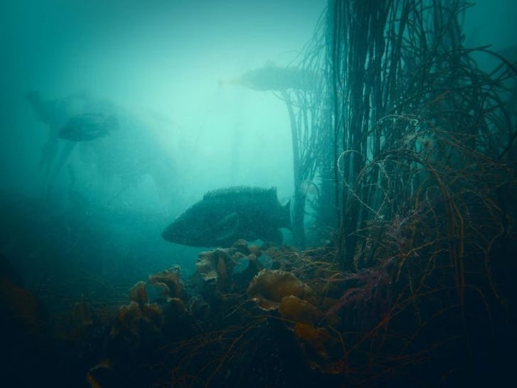 Фотографии, из которых ясно, что морские глубины — сейф, а мы не знаем кода