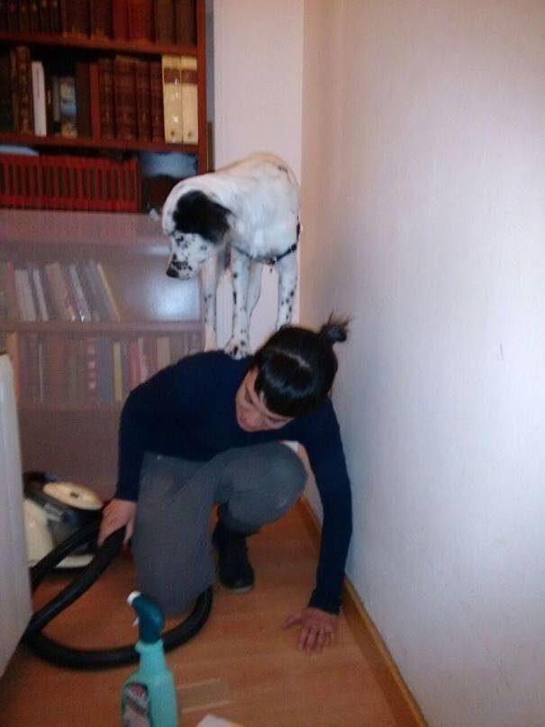Подборка фото про трусливых Собак