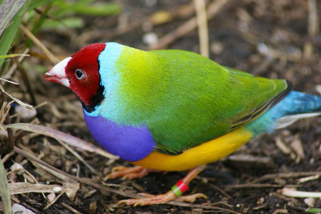 разделе разноцветные птицы фотографии татуировки предпочитаете