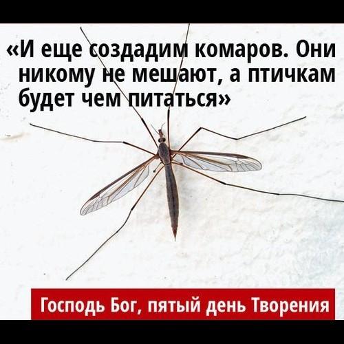 гренки чесноком картинки с фразами про комаров смешные нас низкая цена